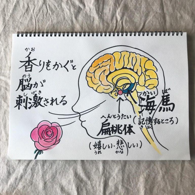植物の香りで集中力がアップする脳の仕組みのイラスト
