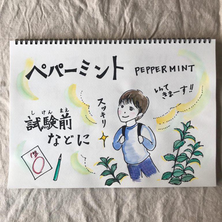ペパーミントのイラスト