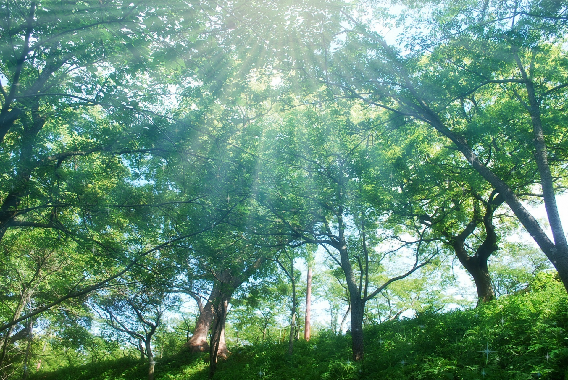 森の木々と木漏れ日